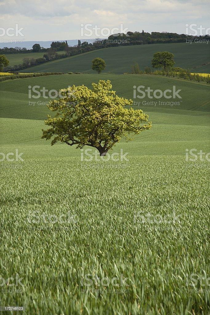 Sunlit tree royalty-free stock photo