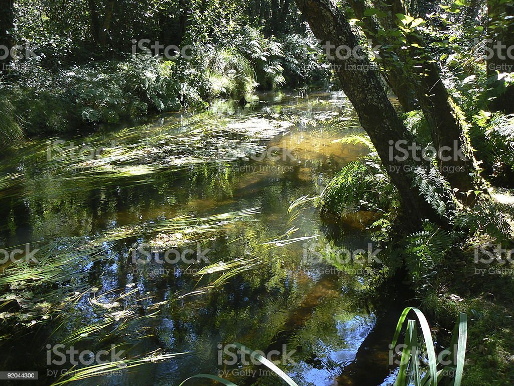 Sunlit water royalty-free stock photo