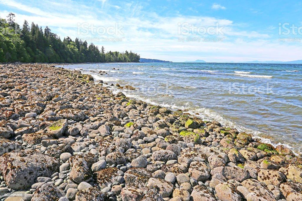 Sunlit Whalebone Beach stock photo