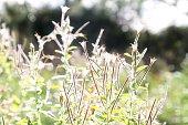 Sunlit wild plants in field