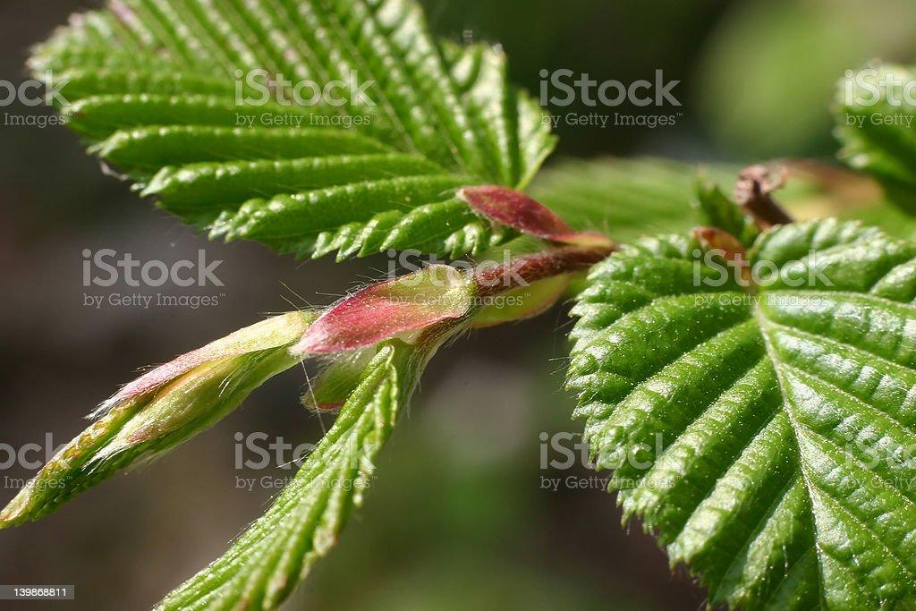 sunlite leafs stock photo