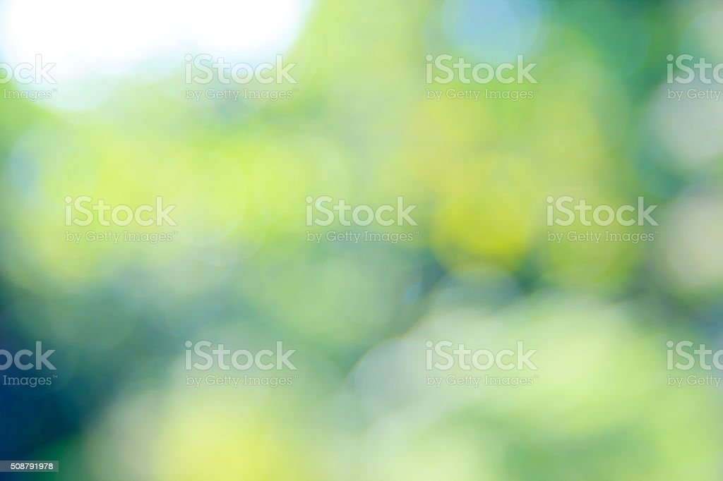 Sunny abstract green nature background, selective focus. stock photo