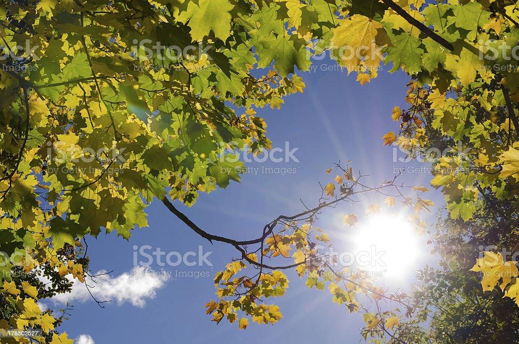 Sunny autumn frame royalty-free stock photo