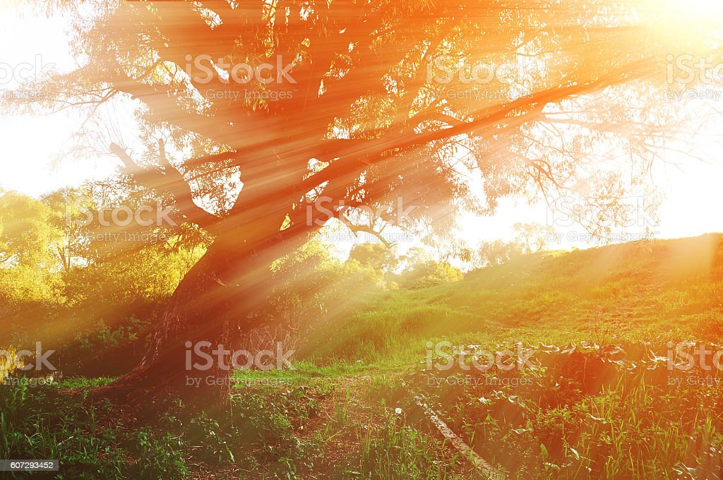 Sunny autumn landscape in the autumn forest with evening sunlight stock photo