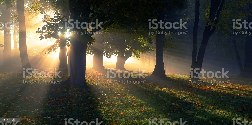 Sunny autumn morning in the old park stock photo