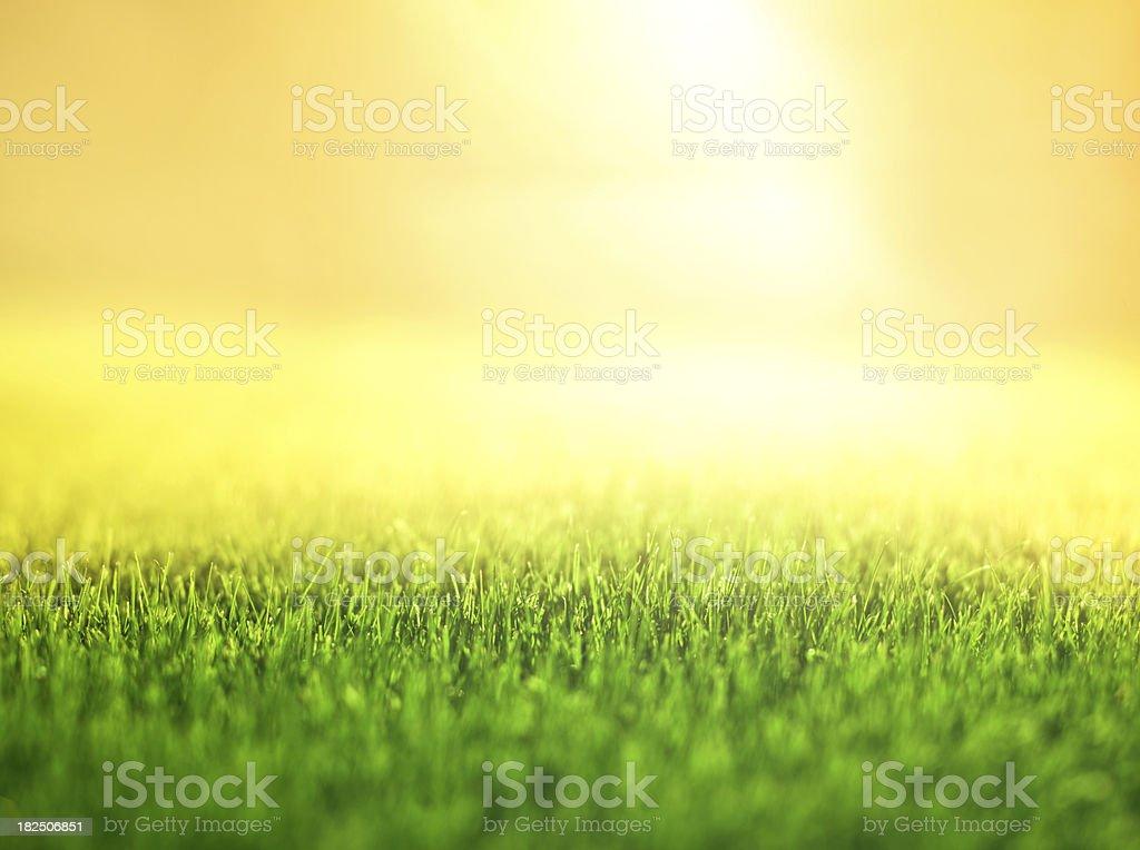 Sunny Background royalty-free stock photo