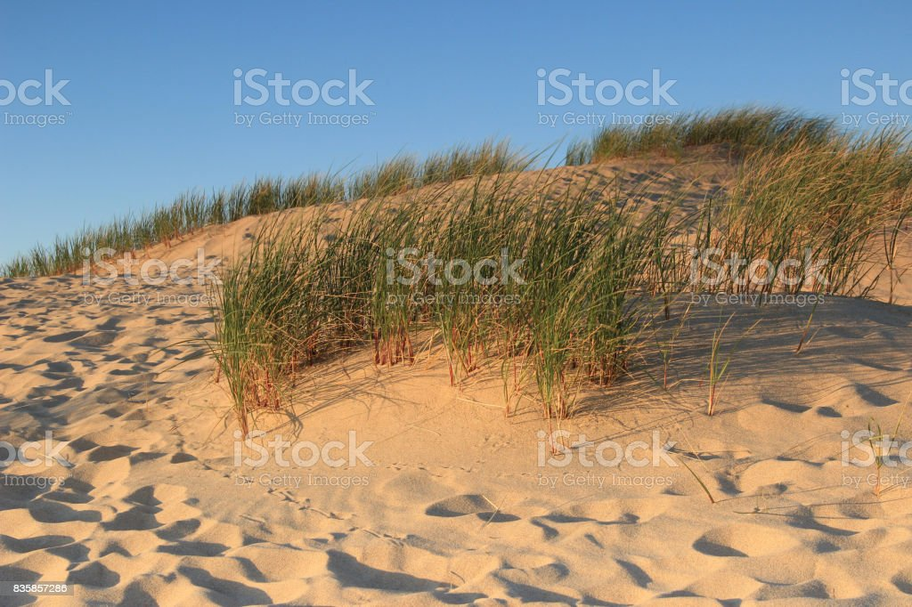 sunny beach with sand dunes and blue sky stock photo