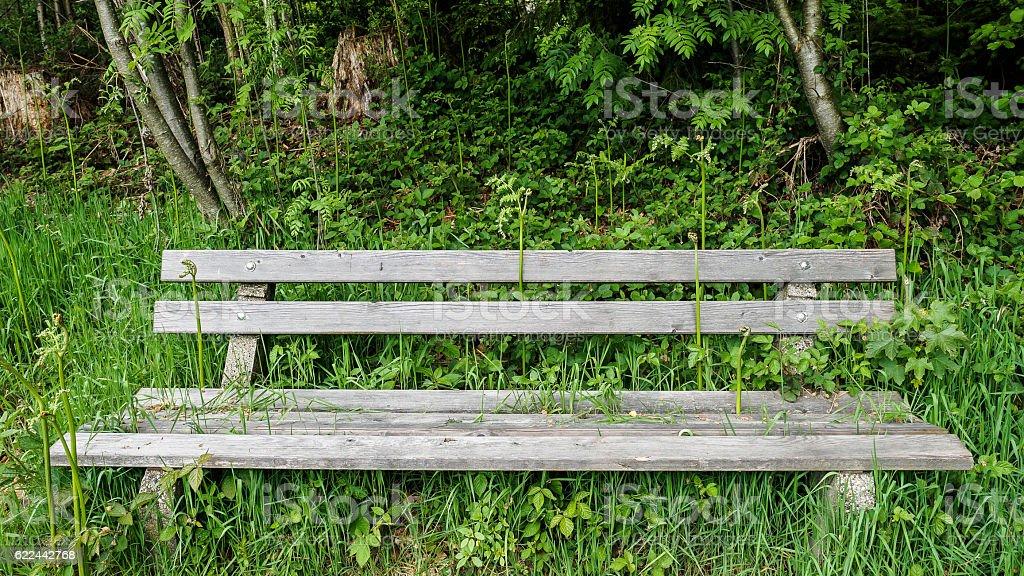 Sunny bench stock photo