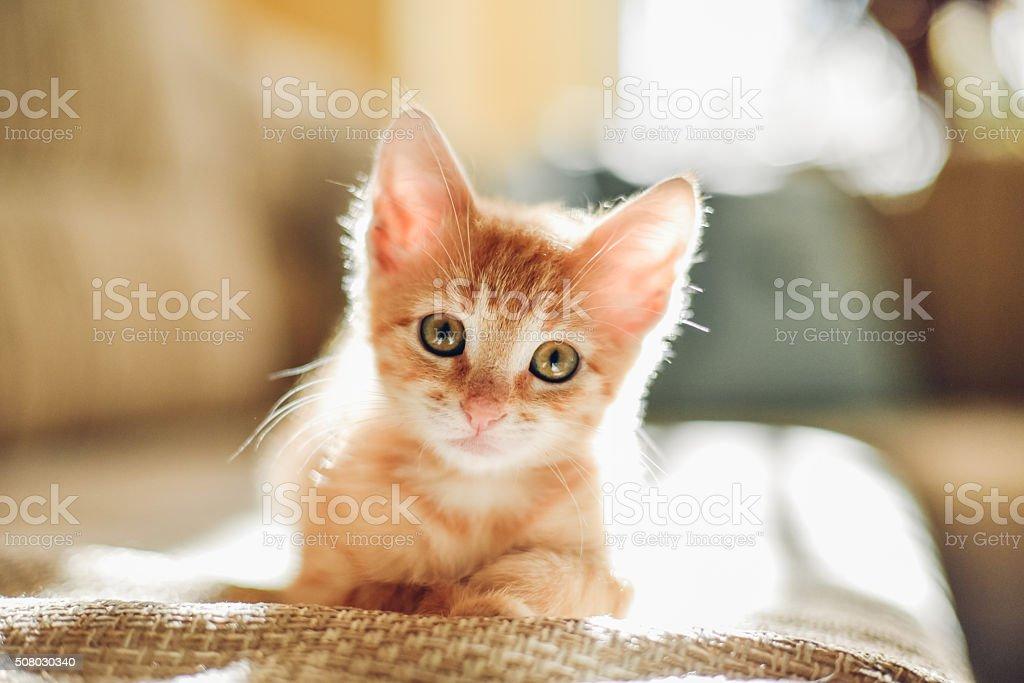 Sunny cat stock photo