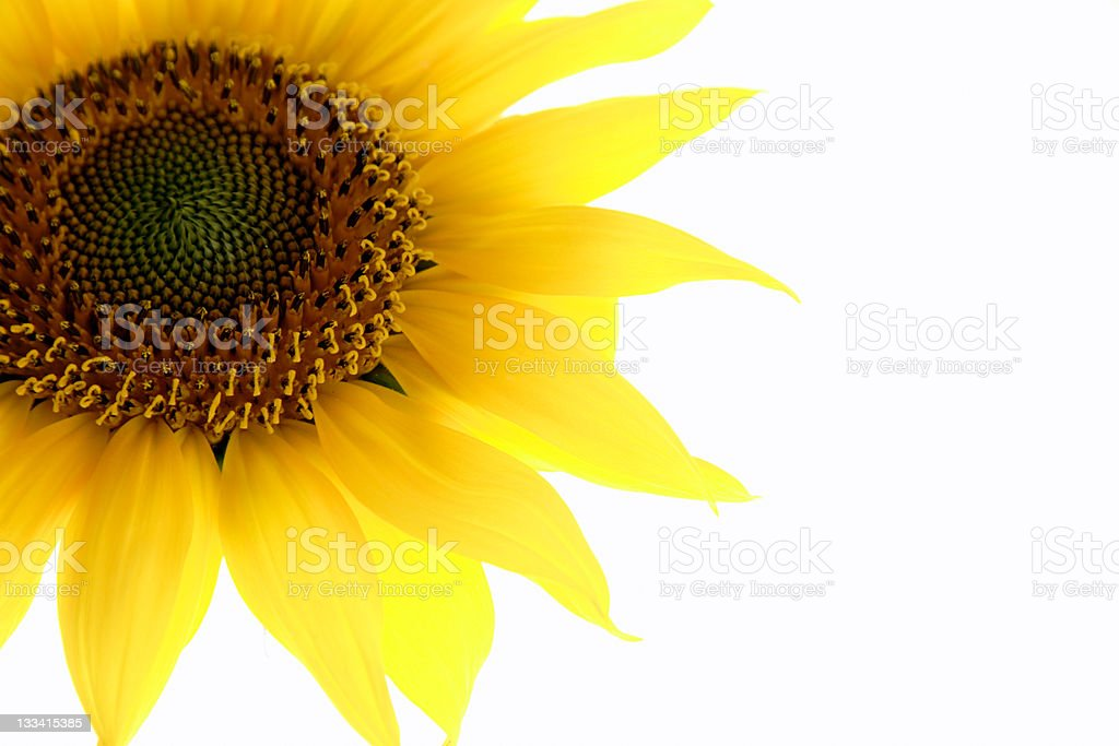 Sunny Corner royalty-free stock photo