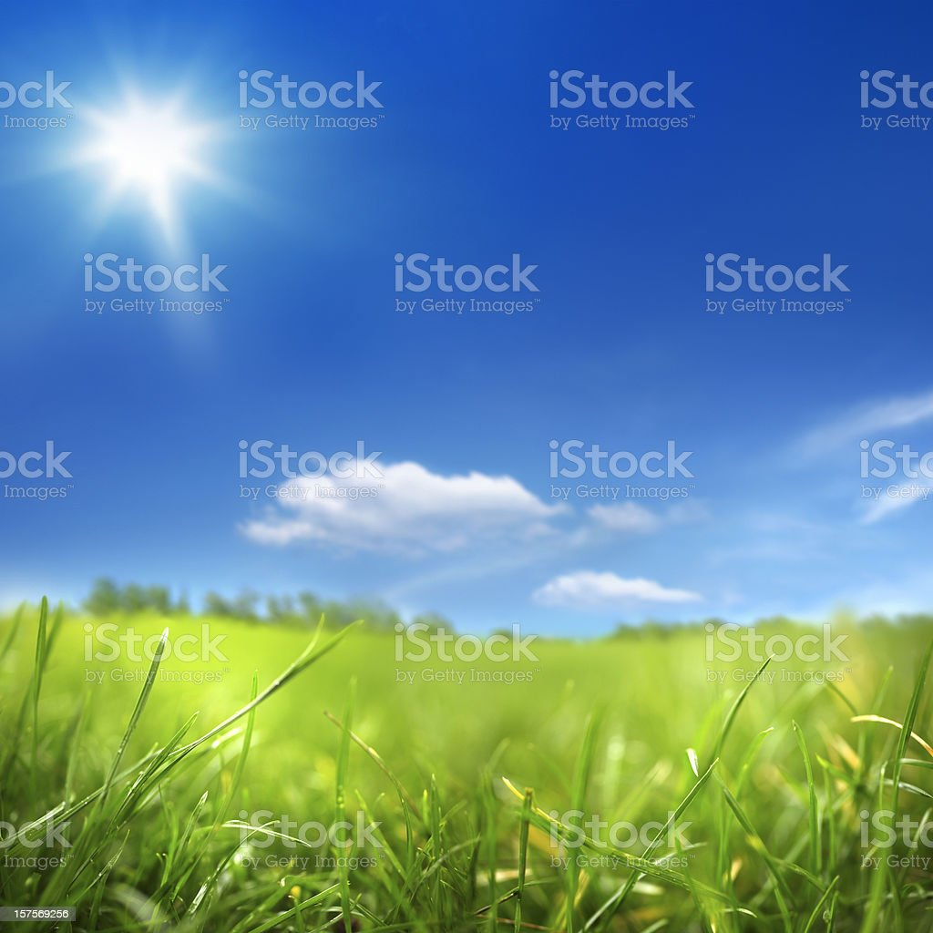 sunny day and green field stock photo