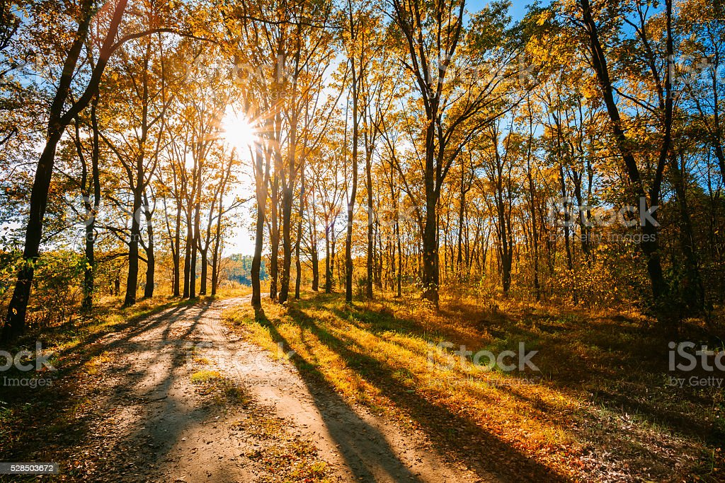 Sunny Day In Autumn Sunny Forest Trees, Green Grass. Nature stock photo