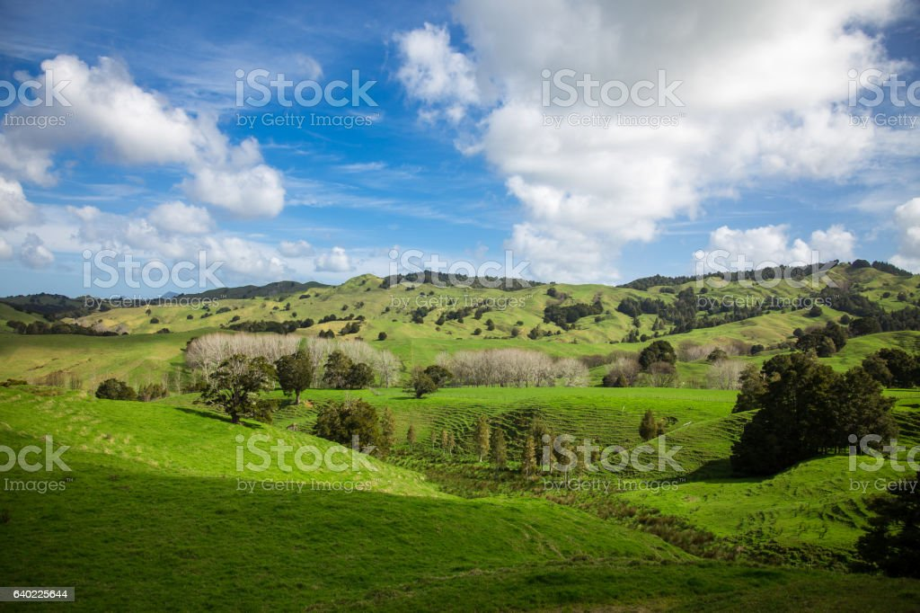Sunny Day in Spring, Northland, New Zealand stock photo