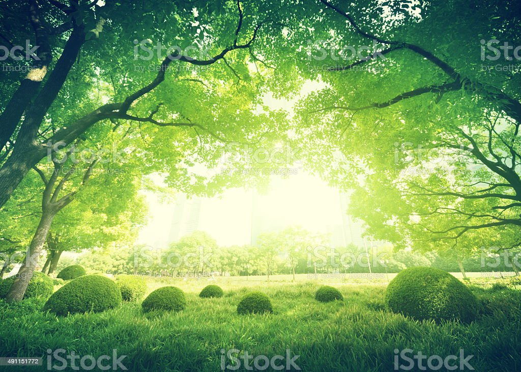 Sunny day in summer park stock photo