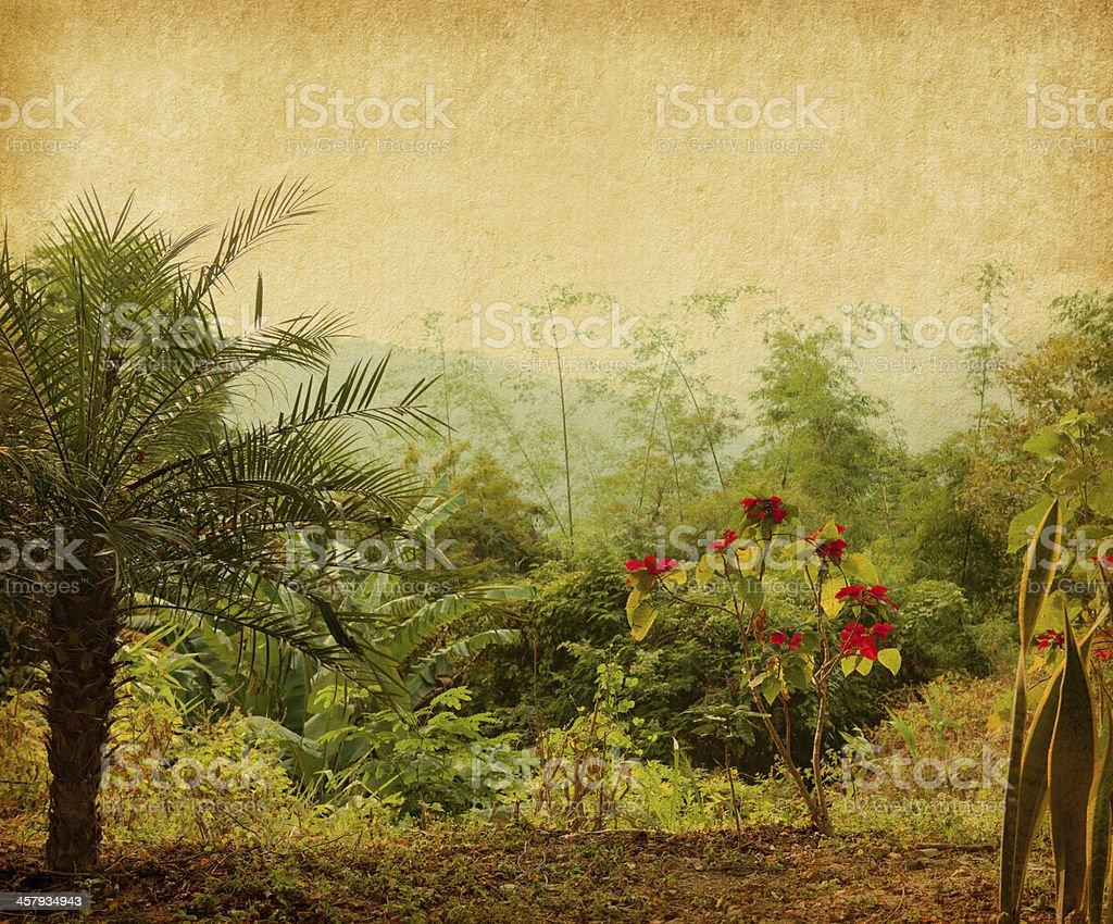 Sunny day in the tropics stock photo