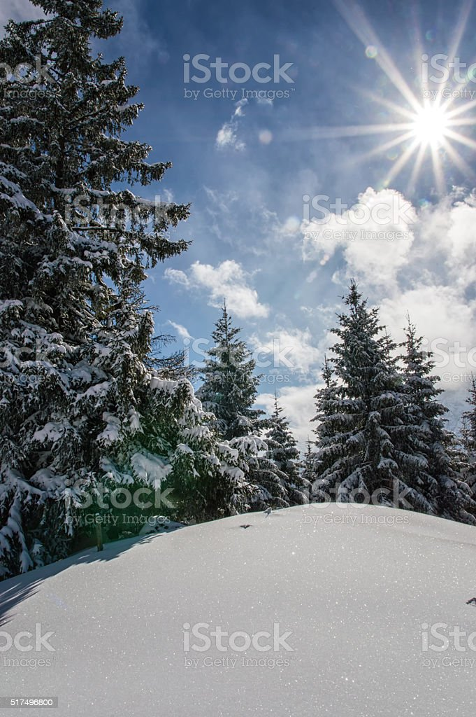 Sunny day in winter stock photo