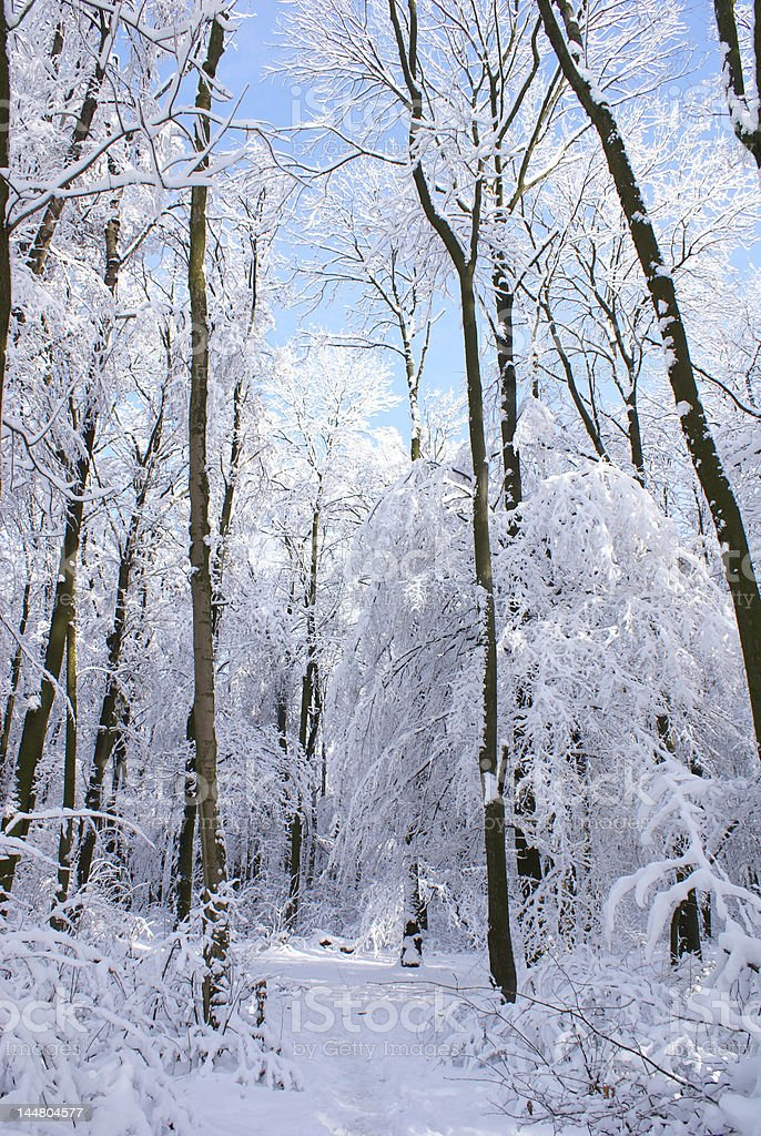 Sunny day of winter royalty-free stock photo