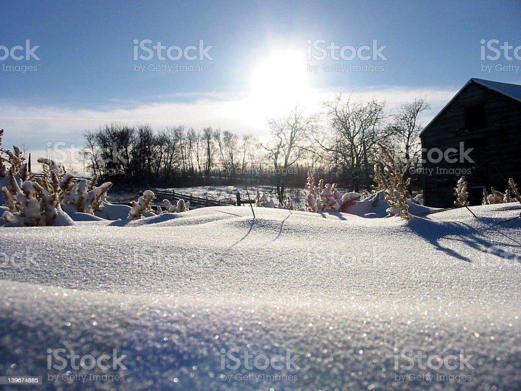 Sunny day on the snowy farm royalty-free stock photo
