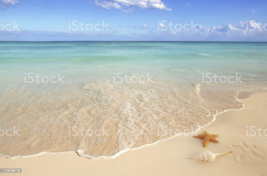 sunny empty beach with a starfish and seashell stock photo
