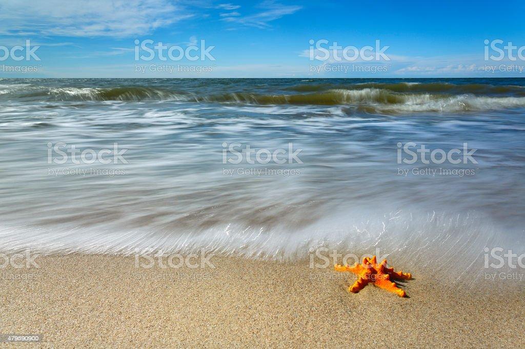 Sunny empty beach with a starfish stock photo