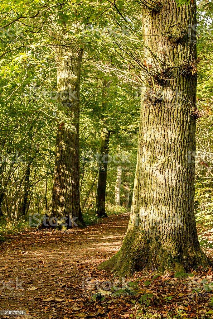 Sunny fall trees stock photo