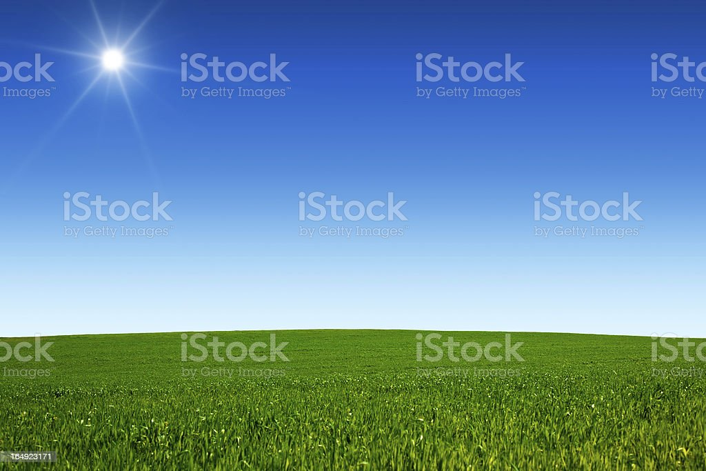Sunny Field royalty-free stock photo
