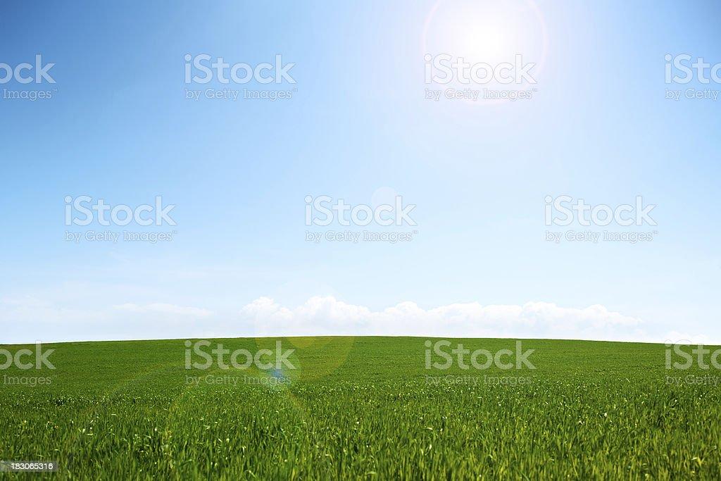 Sunny Field royalty-free stock photo