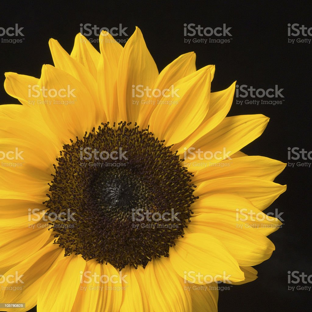 Sunny Flower stock photo