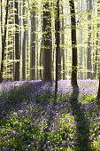 sunny flowering spring forest
