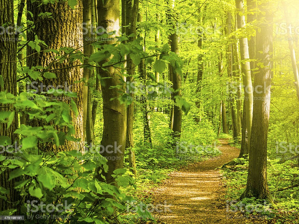Sunny Forest Path royalty-free stock photo