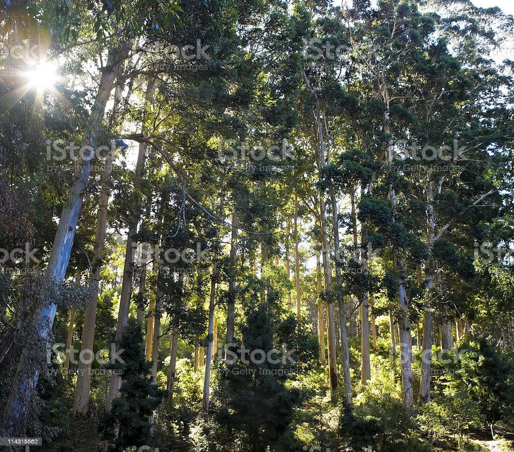 Sunny forest royalty-free stock photo