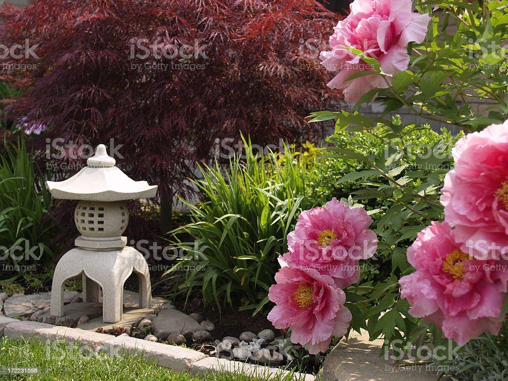 sunny garden,flowering peony tree, dwarf maple and lantern royalty-free stock photo