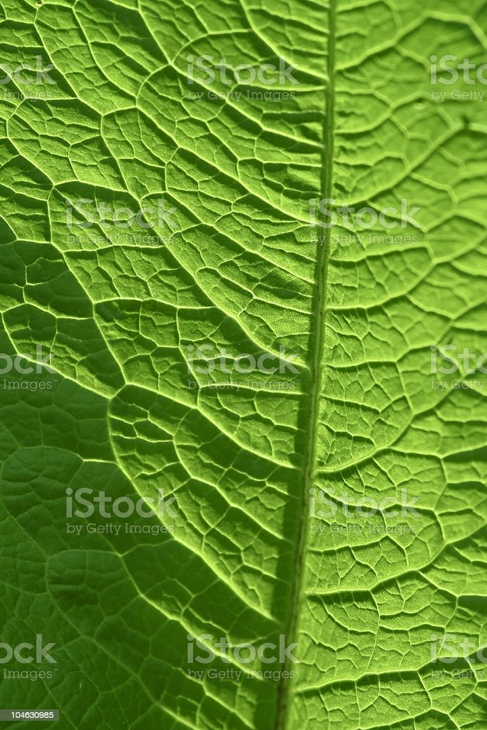 sunny geeen leaf closeup royalty-free stock photo
