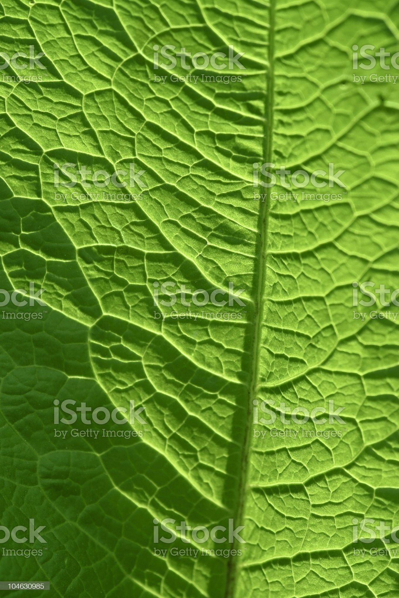 sunny geeen leaf closeup royalty-free stock photo