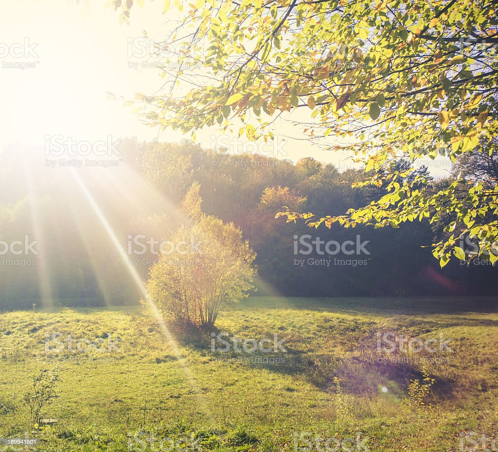 Sunny glade stock photo