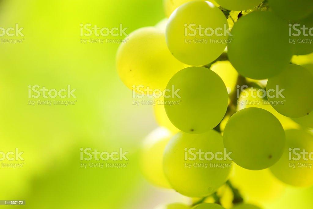 Sunny grapes royalty-free stock photo