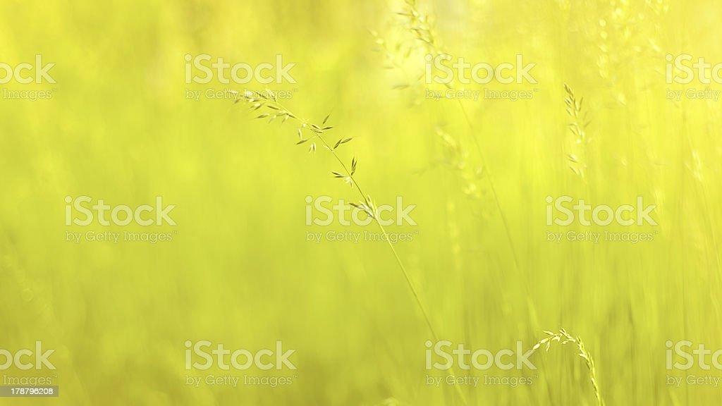 Ensoleillé fond herbe photo libre de droits