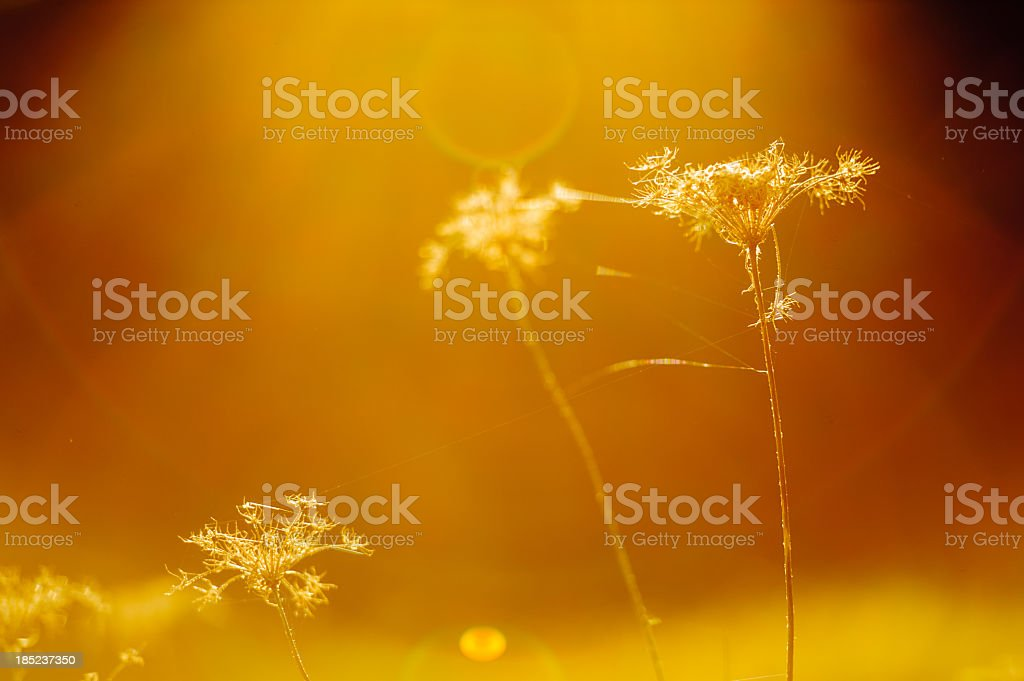 Sunny grass royalty-free stock photo