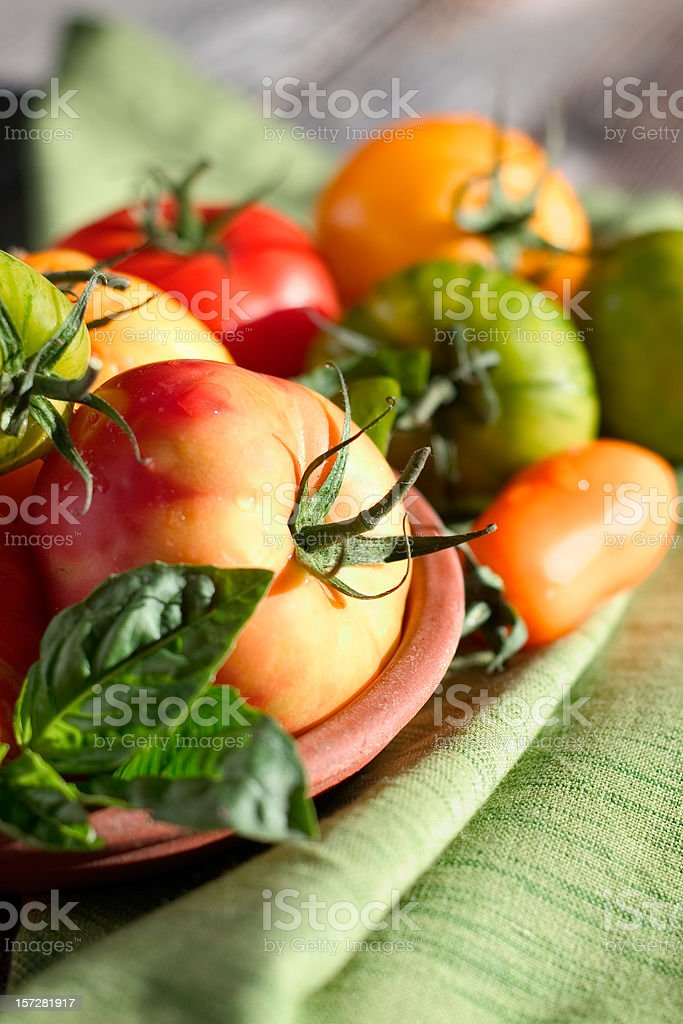 Sunny Heirloom Tomatoes royalty-free stock photo