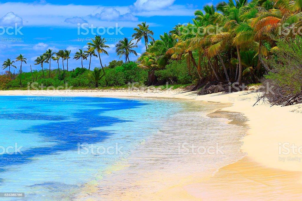 Sunny Idyllic caribbean palm trees, turquoise  beach sunrise stock photo