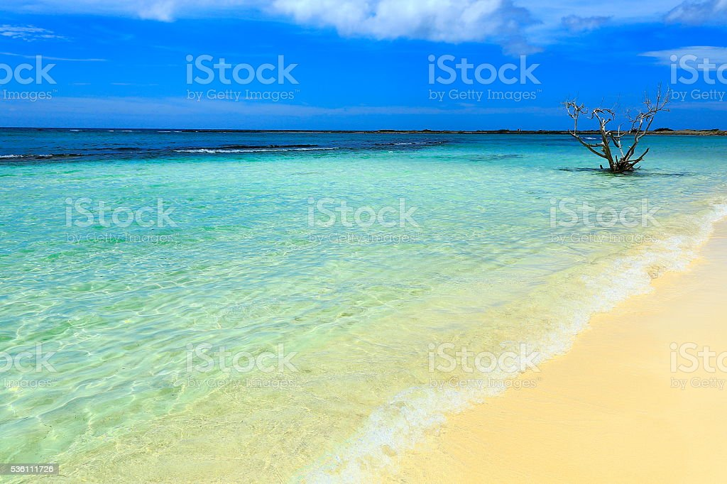Sunny Idyllic turquoise caribbean beach, Aruba, Antilles stock photo