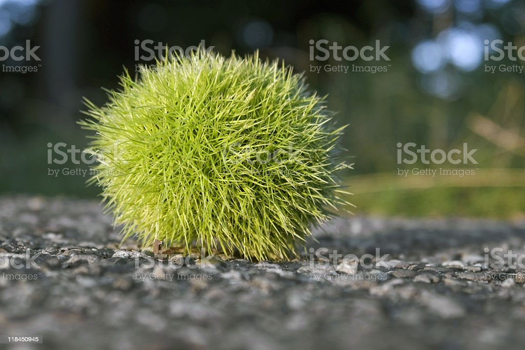 sunny illuminated green chestnut royalty-free stock photo
