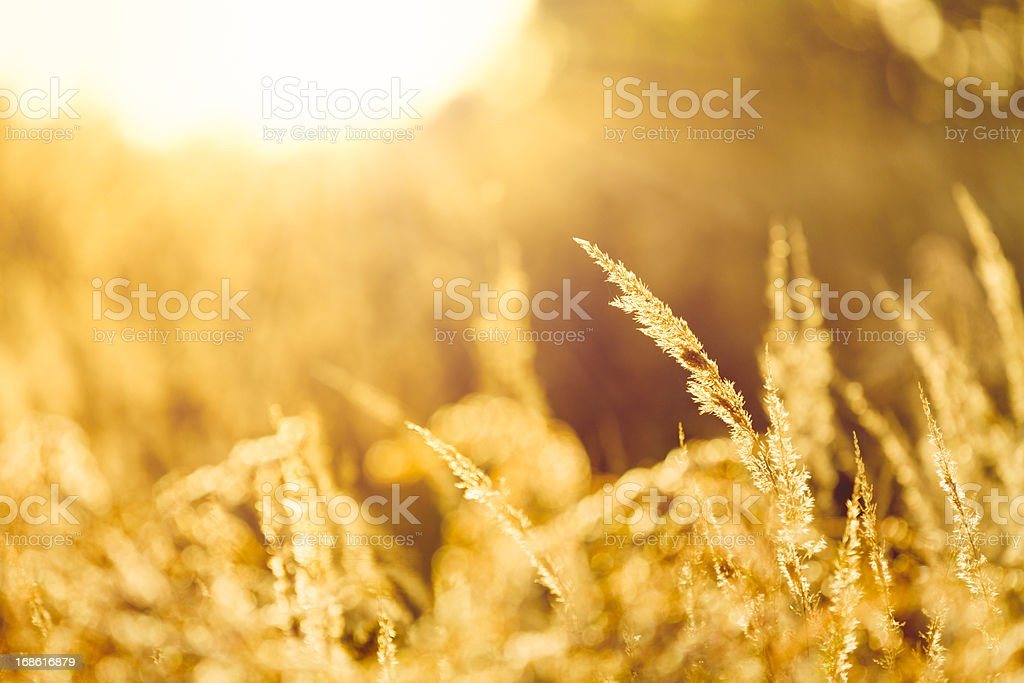 Sunny meadow royalty-free stock photo