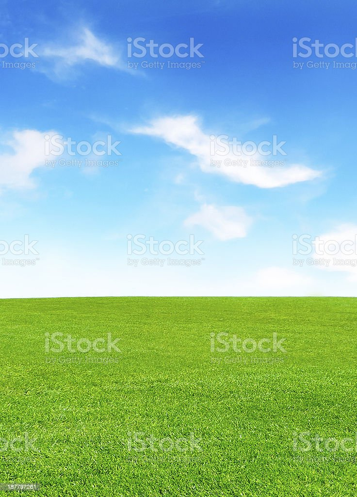 sunny meadow stock photo