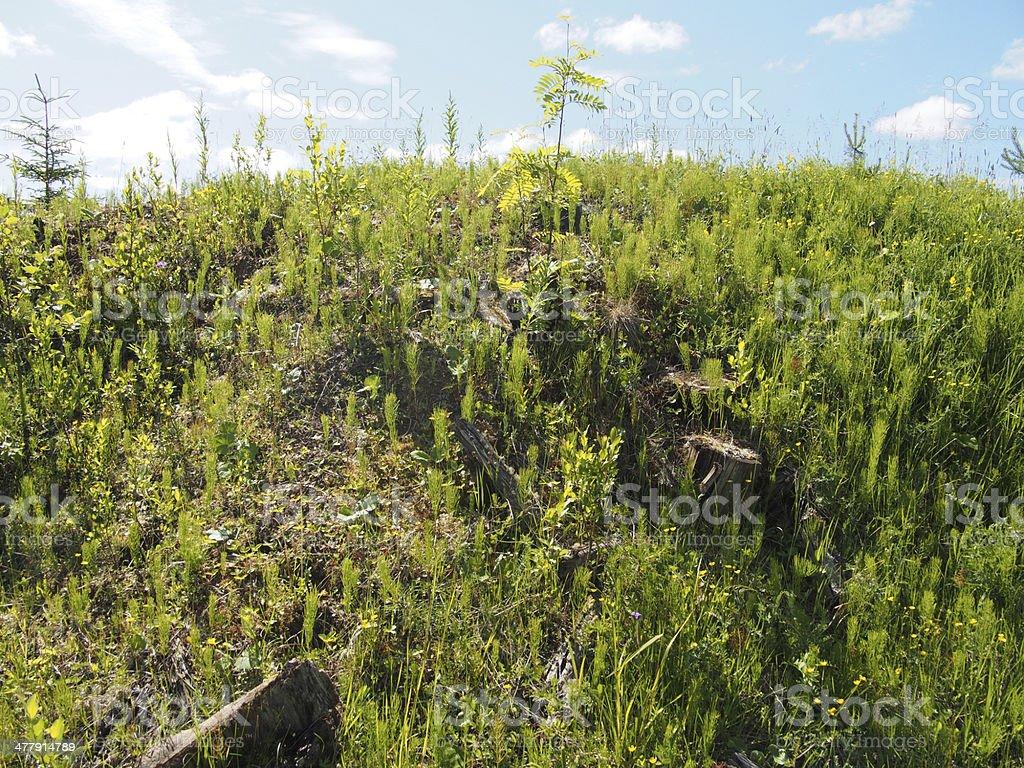 sunny meadow stock photo