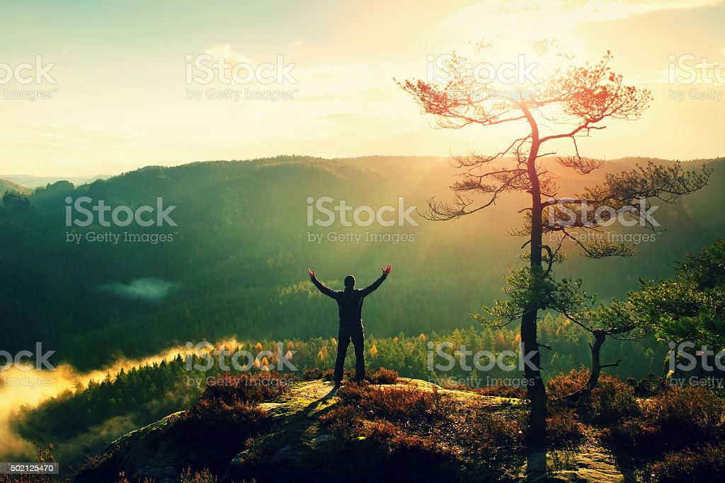 Sunny morning. Happy hiker with hands in air bellow tree stock photo