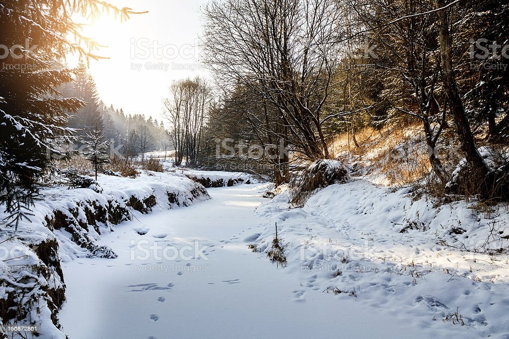 Sunny morning in winter landscape royalty-free stock photo