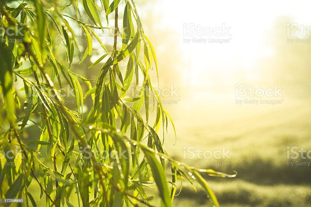 Sunny morning royalty-free stock photo