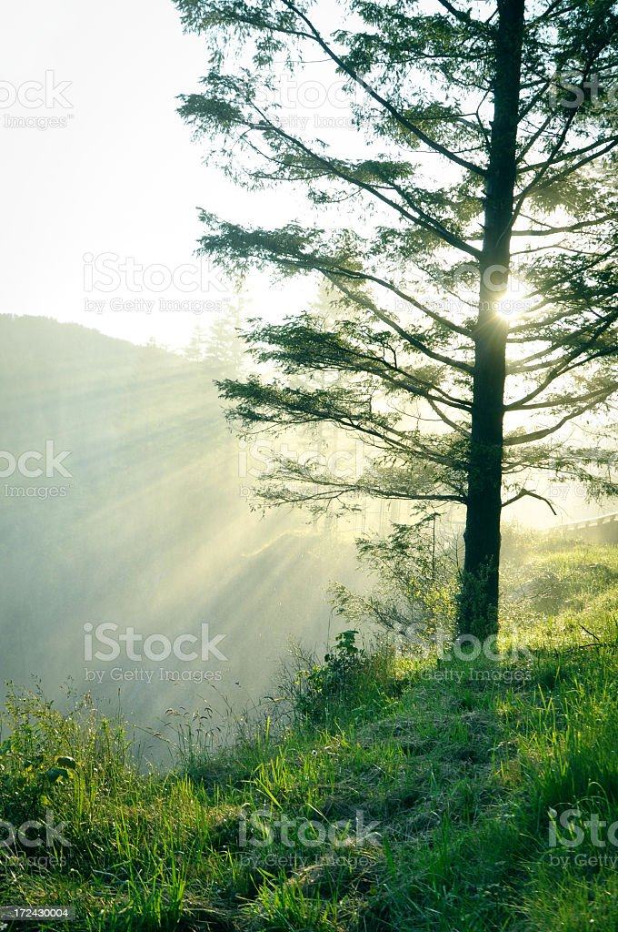 Sunny Morning stock photo