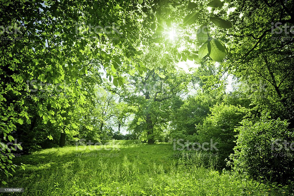 Sunny Nature royalty-free stock photo